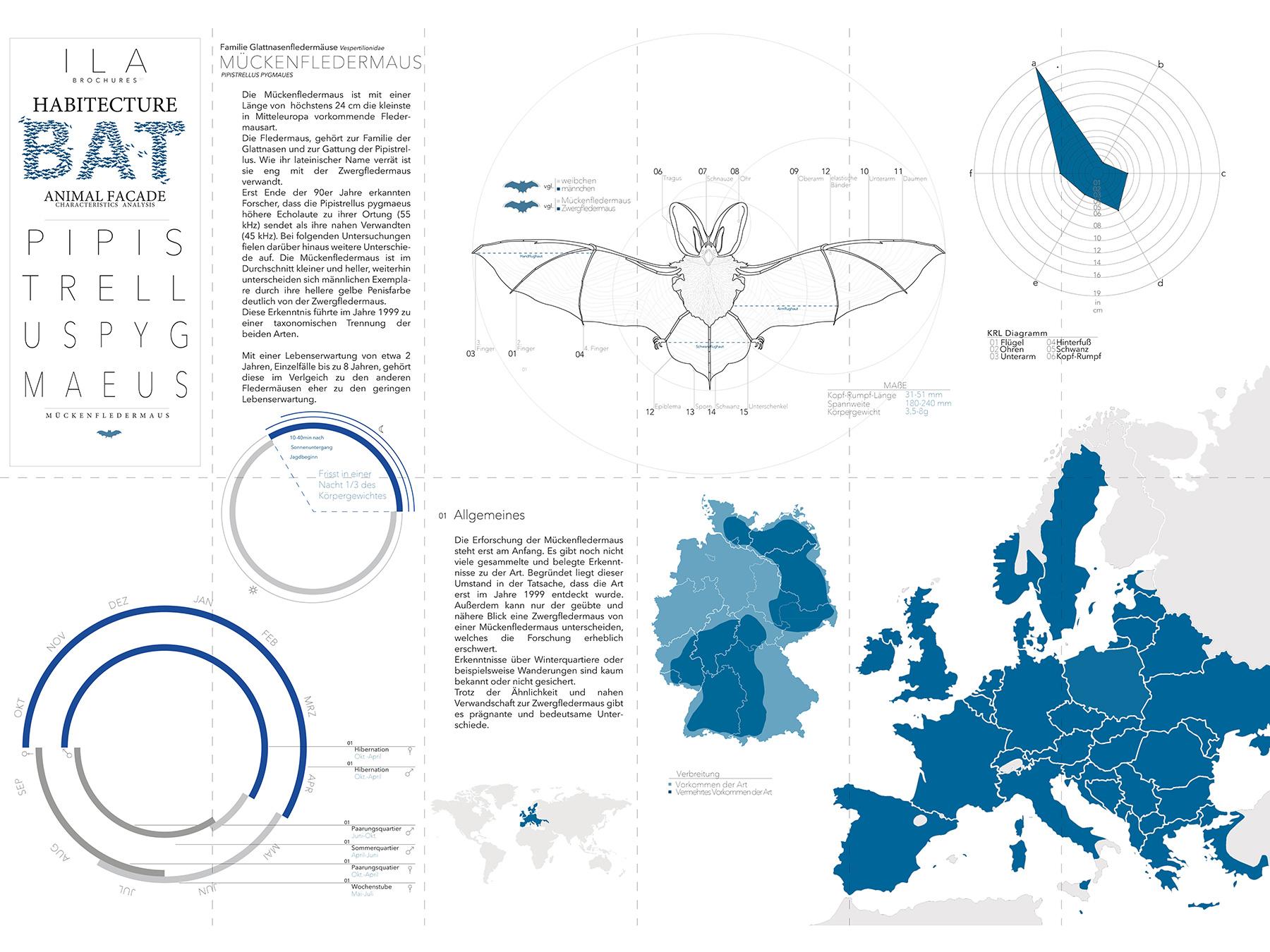 Analysen Animal Facade I Mückenfledermaus Pipistrellus pygmaeus I Zeichnung Christin Bolling - 01