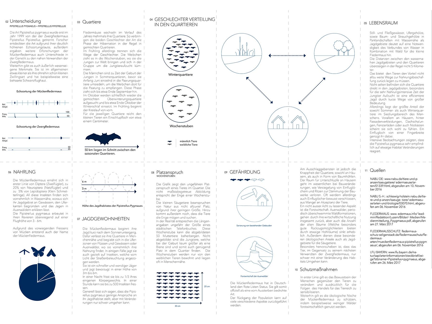 Analysen Animal Facade I Mückenfledermaus Pipistrellus pygmaeus I Zeichnung Christin Bolling - 02