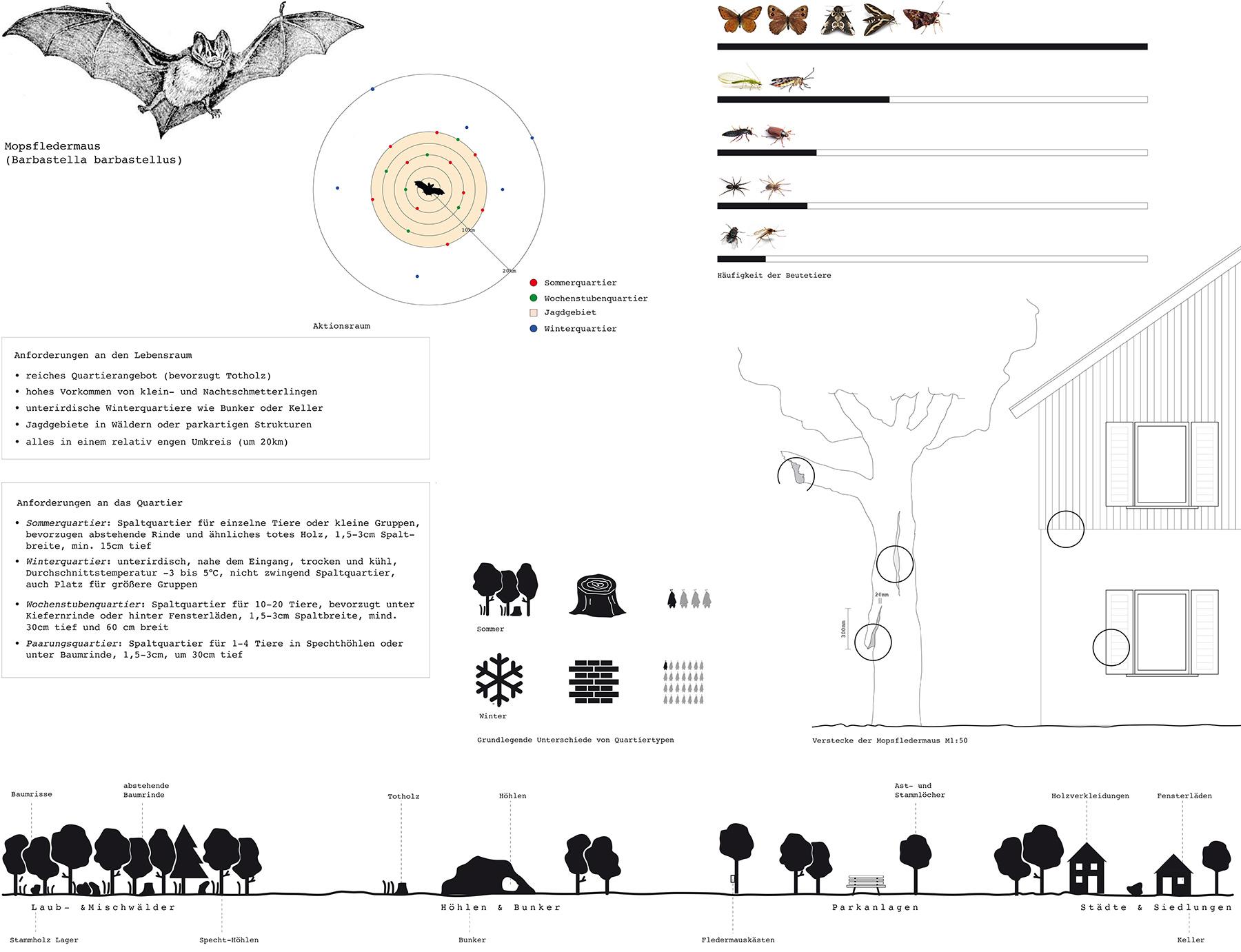 Analysen Bat Sculpture I Mopsfledermaus Barbastella barbastellus I Zeichnung Britta Biehn