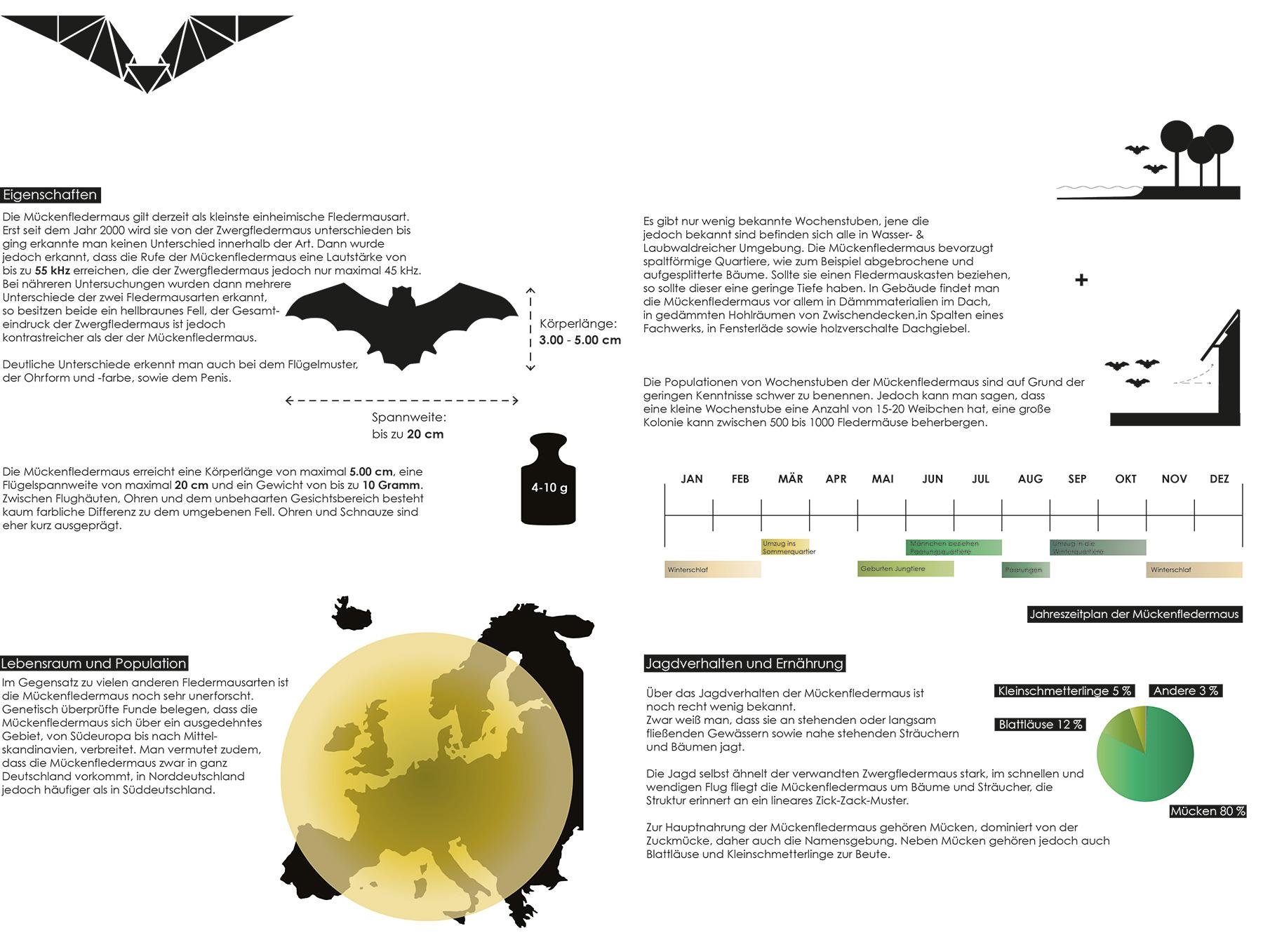 Analysen Bat Sculpture I Mückenfledermaus Pipistrellus pygmaeus I Zeichnung Anja Jaekel - 01