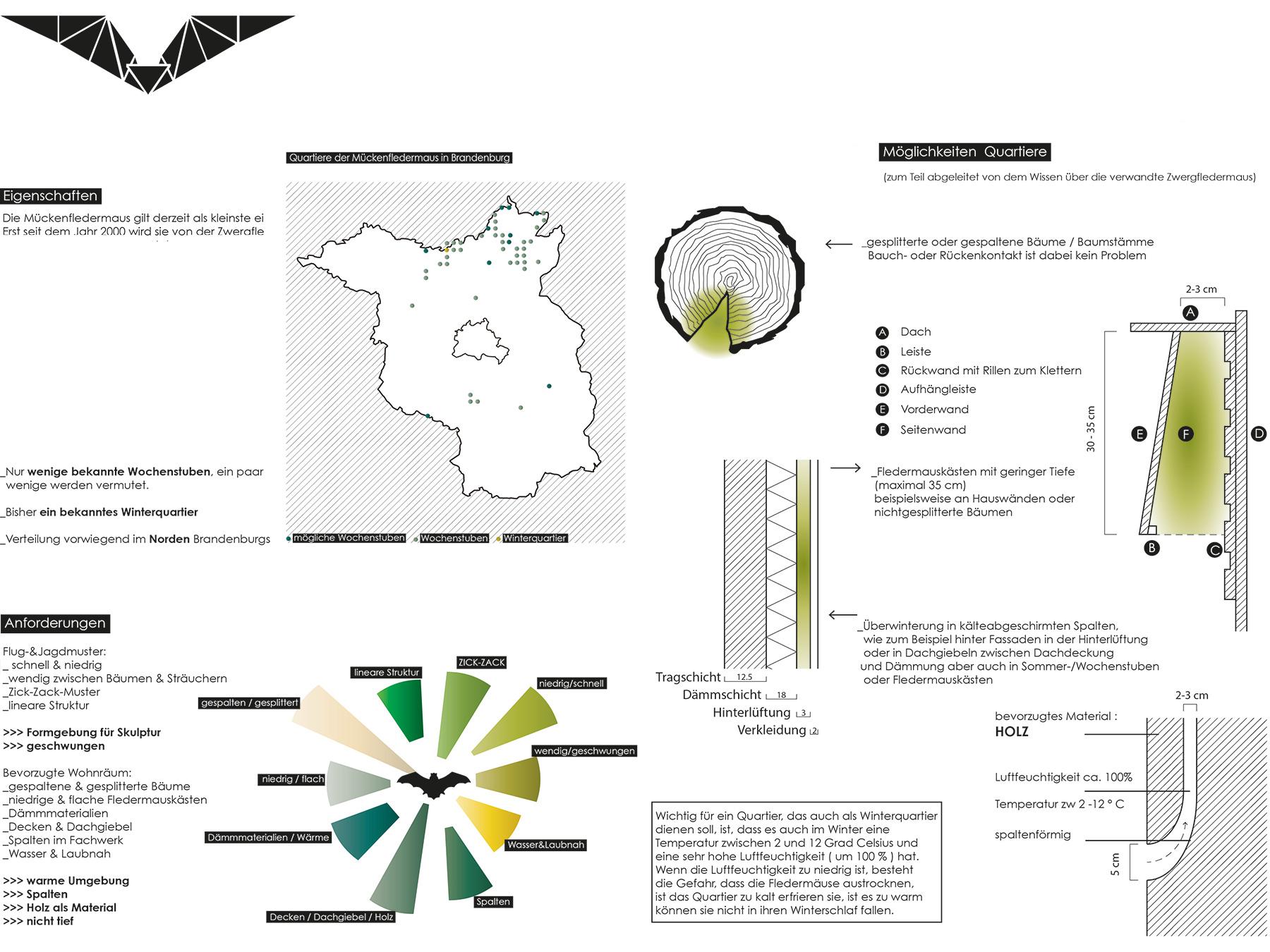 Analysen Bat Sculpture I Mückenfledermaus Pipistrellus pygmaeus I Zeichnung Anja Jaekel - 02