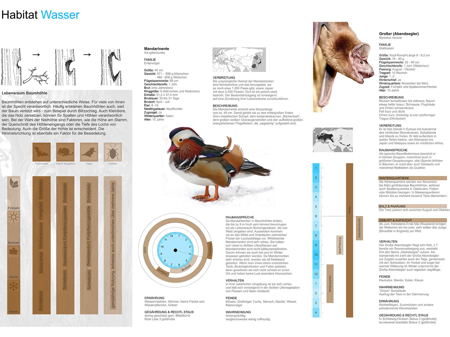 Analysen Habitat Wasser I Mandarinente Aix galericulata I Großer Abendsegler Nyctalus noctula I Zeichnung Michael Tanz